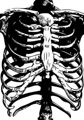 Human Skeleton Digital Art - Skeleton Ribs by Eclectic at HeART