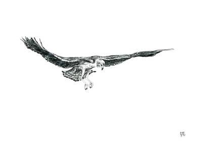 Osprey Mixed Media - Sketch - Osprey Hunt Fight by Shirley Heyn
