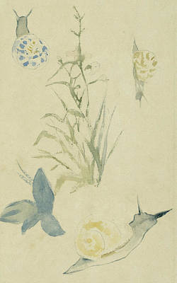Nature Art Drawing - Sketches Of Snails, Flowering Plant by Edouard Manet