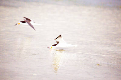 Bird Photograph - Skimmers High Key By Darrell Hutto by J Darrell Hutto