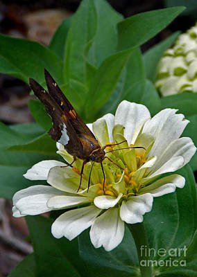 Images Of Cats Photograph - Skipper Two by Skip Willits