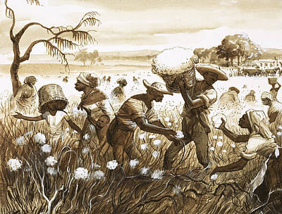 Slaves Picking Cotton Print by English School