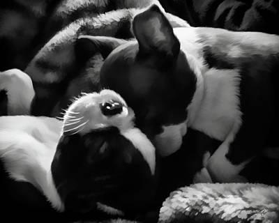 Sleeping Beauties - Boston Terriers Print by Jordan Blackstone