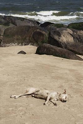 Sleeping Dog Print by Joana Kruse