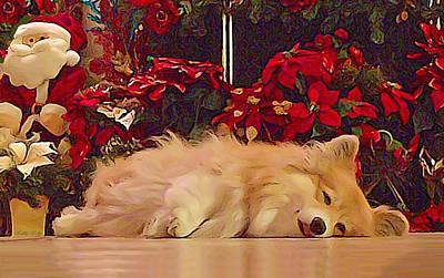 Sleepy Holiday Corgi Surrounded By Poinsettias. Print by Kathy Kelly