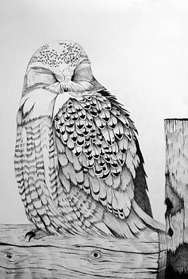Sleepy Snowy Owl On Fence Post Print by Leslie M Browning