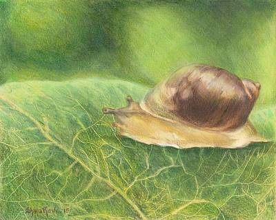 Terrestrial Drawing - Slow And Steady by Shana Rowe Jackson