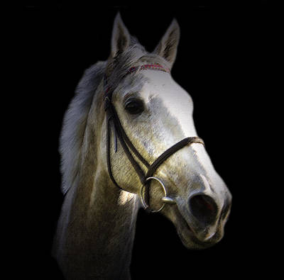Equine Photograph - Smad Place Hennessy Gold Cup Winner 2015 by Andy Armfield