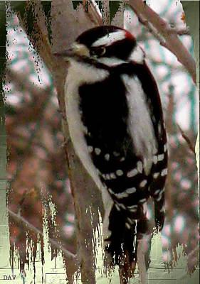 Woodpecker Mixed Media - Small Woodpecker by Debra     Vatalaro