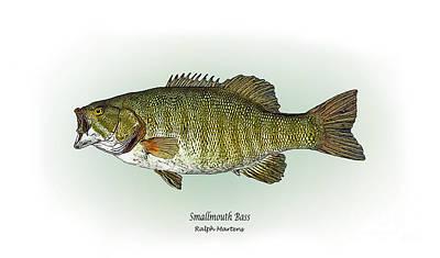 Bass Fishing Drawing - Smallmouth Bass by Ralph Martens