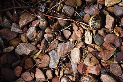 Danny Garcia Photograph - Snails by Danny Garcia