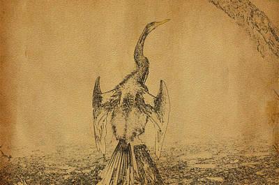 Anhinga Drawing - Snake Bird Or Darter  by Manjot Singh Sachdeva