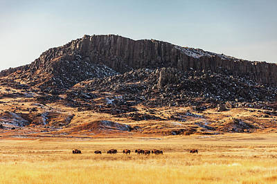 Bison Photograph - Snake Butte by Todd Klassy