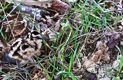Snipe In Camouflage Print by Douglas Barnett