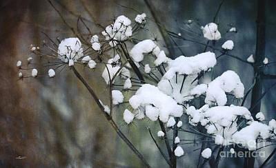 Snow Caps Print by Jutta Maria Pusl