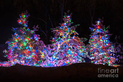 Snow Covered Christmas Trees Print by Patrick Shupert