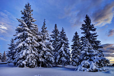 Snow Covered Trees Print by Ivan Slosar