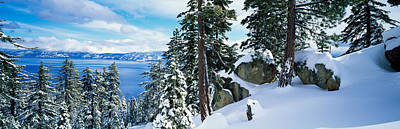 Snow Covered Trees On Mountainside Print by Panoramic Images
