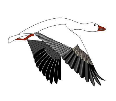Snow Goose Print by Fred Croydon