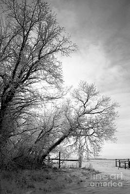 Snow Lace Print by Julie Lueders