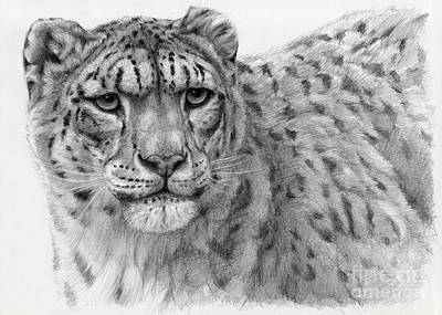 Leopard Drawing - Snow Leopard Portrayal by Svetlana Ledneva-Schukina