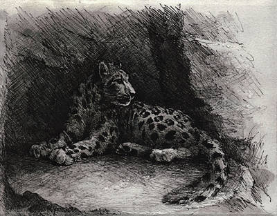 Panther Drawing - Snow Leopard by Rachel Christine Nowicki