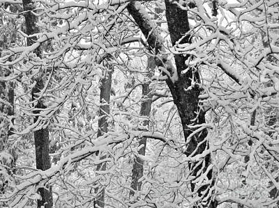 All Faa Photograph - Snow On The Trees In Black And White by Mary Ann Weger
