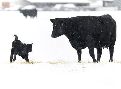 Snow Play Print by Mike Dawson