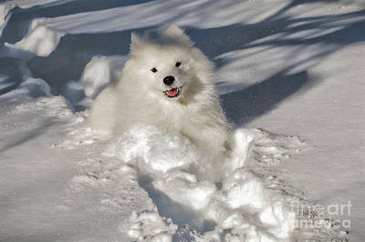 Dog In Snow Photograph - Snow Queen by Lois Bryan