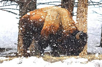 Bison Digital Art - Snow Storm by Image Takers Photography LLC - Carol Haddon