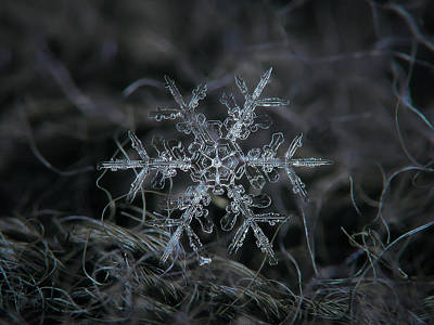 Snowflake 2 Of 19 March 2013 Print by Alexey Kljatov