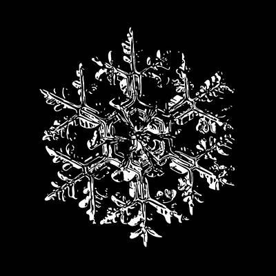 Snowflake Vector - Gardener's Dream Black Version Print by Alexey Kljatov