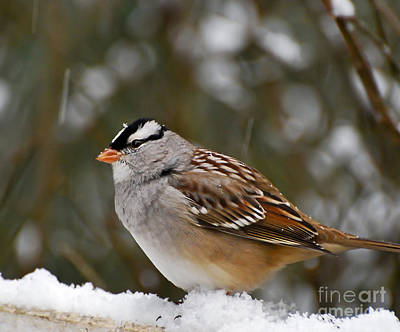 Winter Photograph - Snowflakes On Feathers by Kerri Farley