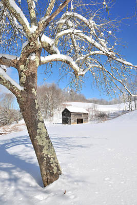 Snowy Barn Framed By Tree Print by Alan Lenk