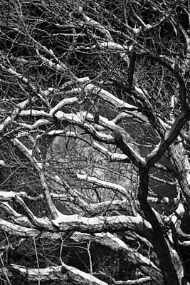Snowy Branches Against A Full Moon Print by John Haldane