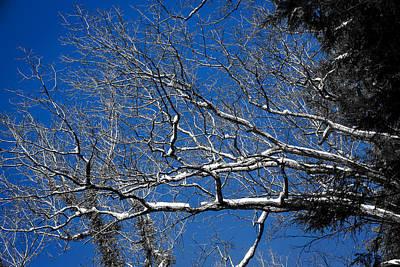 Snowstorm Digital Art - Snowy Branches Against A Naked Sky by John Haldane