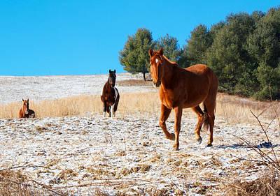 Snowy Day Horse Pasture Print by Orange Cat Art