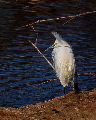 Egret Digital Art - Snowy Egret Digital Art by Ernie Echols