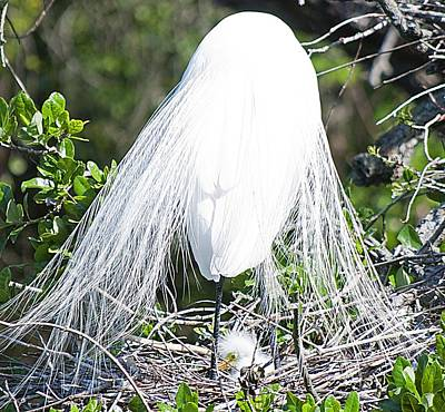 Snowy Egret Mom And Chick Original by Kenneth Albin