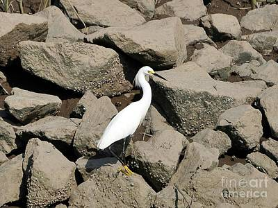 Snowy Egret On The Rocks Print by Al Powell Photography USA