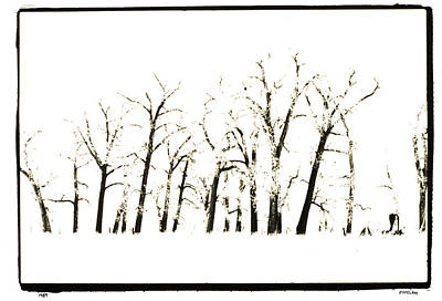 Winter Photograph - Snowy Line Up by Jerry McElroy
