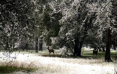 Photograph - Snowy Morning In Cottonwood Ca 2 by Joyce Dickens