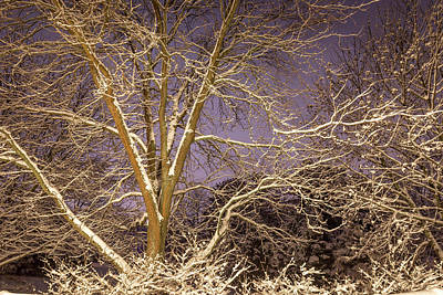 Snowy Night Print by Todd Reese