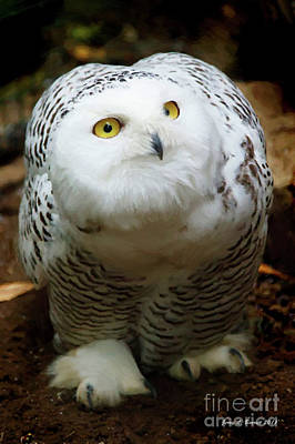 Snowy Owl Print by Jerry L Barrett