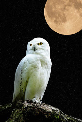Snowy Owl Under The Moon Print by Scott Carruthers
