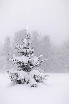 Winter Storm Mixed Media - Snowy Pine Tree by Lori Deiter
