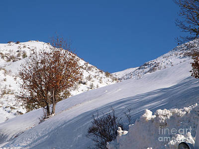 Israel Photograph - Snowy Slope With A Rusty Tree by Arik Baltinester