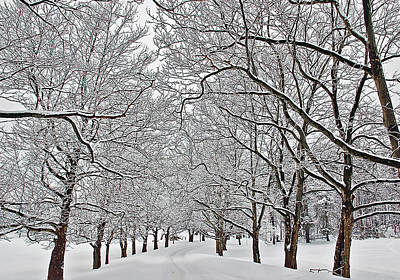 Winter Landscape Photograph - Snowy Treeline by Aimee L Maher Photography and Art Visit ALMGallerydotcom