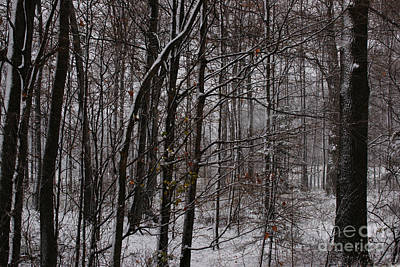 Flurries Photograph - Snowy Woods by Linda Shafer