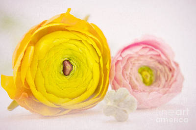 Flower Still Life Mixed Media - So Sweet by Angela Doelling AD DESIGN Photo and PhotoArt